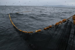 fishing nets at sea